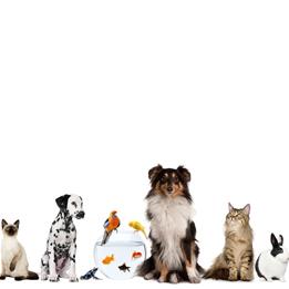 servicios-animales